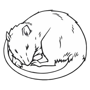 Illustration of sleeping rat