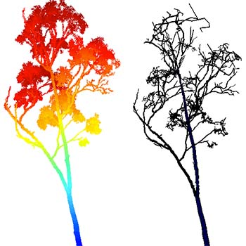 Tree scanning 1