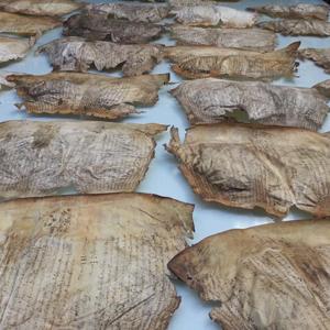 Great Parchment book folios
