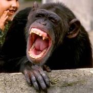 monkey laughing
