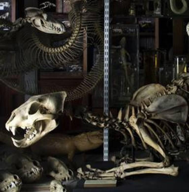 Carnivore display