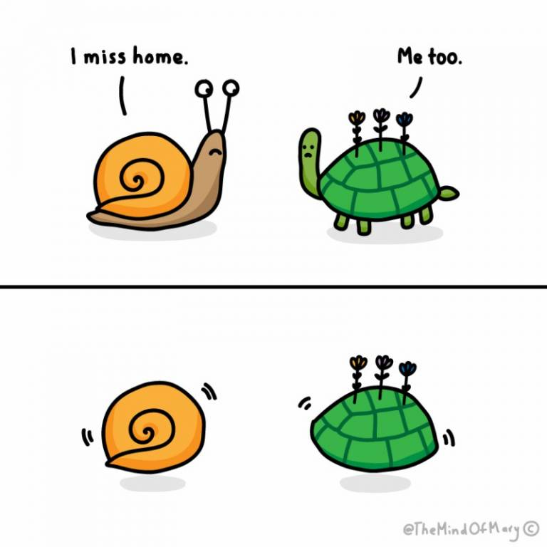 Homesick turtles