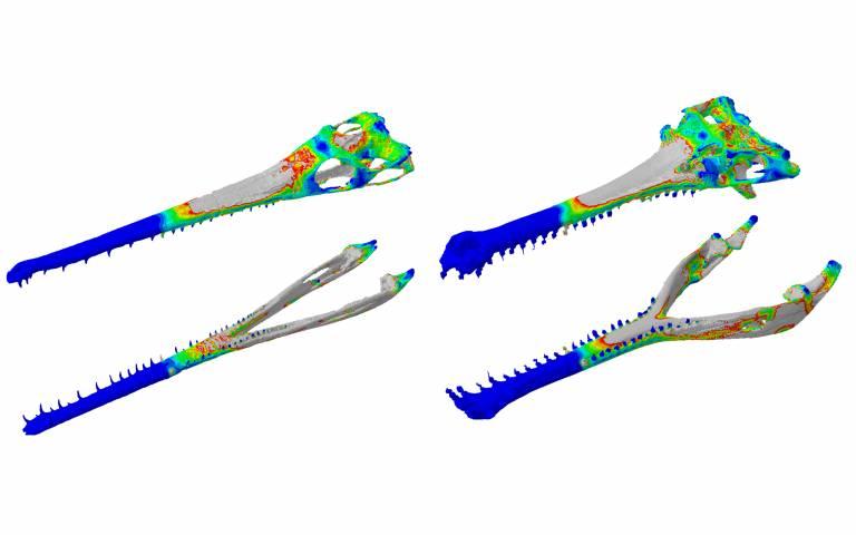 crocodile web