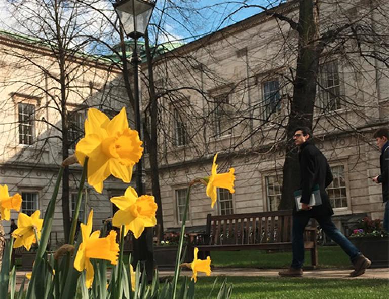 Daffodils in the Quad