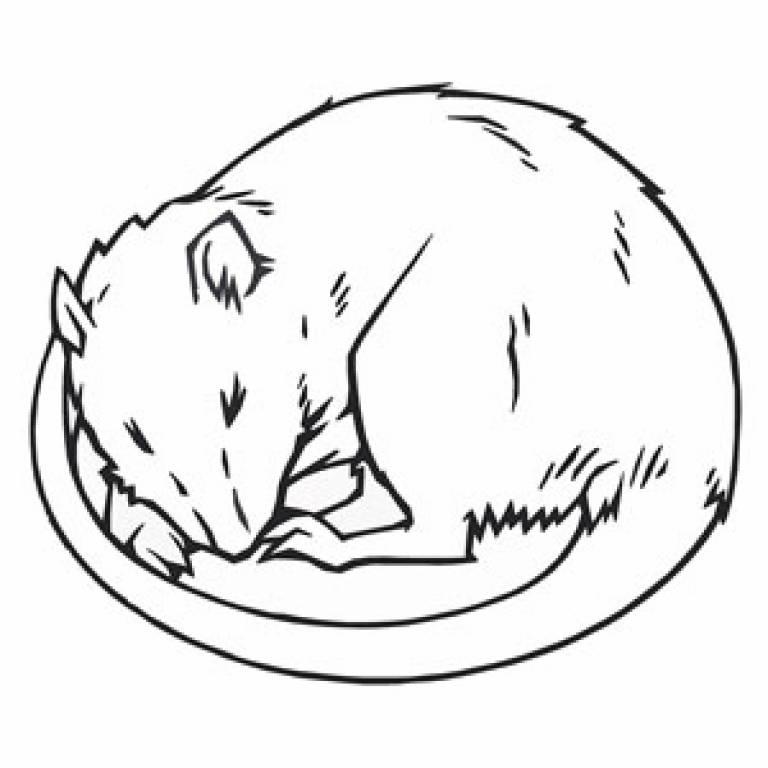 Illustration of sleeping rat