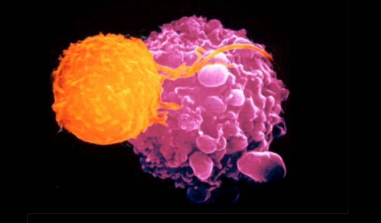 T Cell targeting of cancer