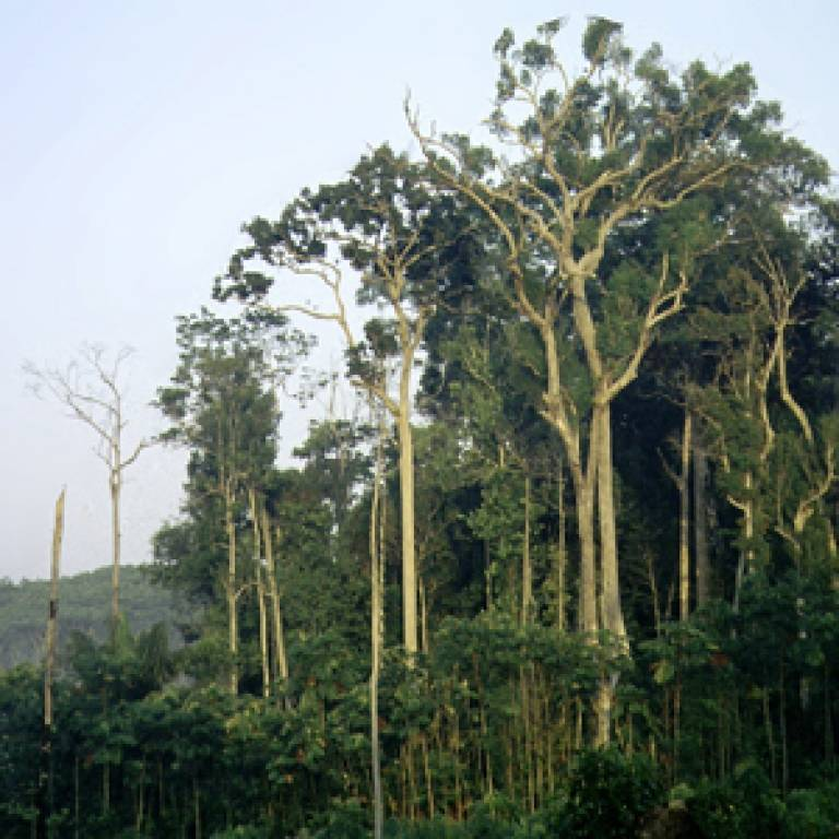 A small fragment of mature Amazon forest surrounded by agricultural land in Manaus, Brazil.by Christopher Dick, University of Michigan.