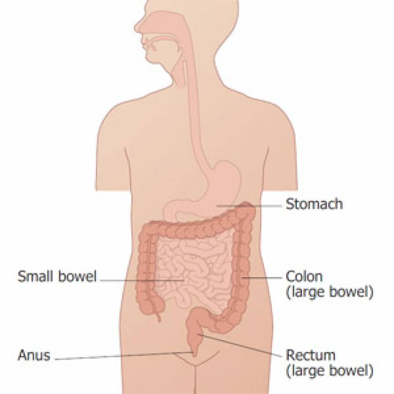 Diagram of the bowels