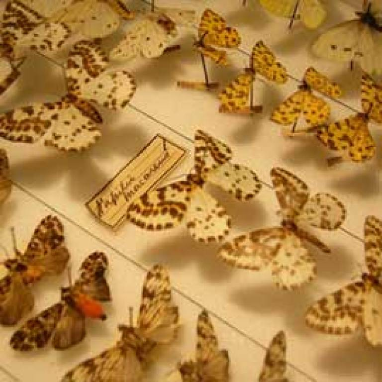 Butterflies at the Grant Museum