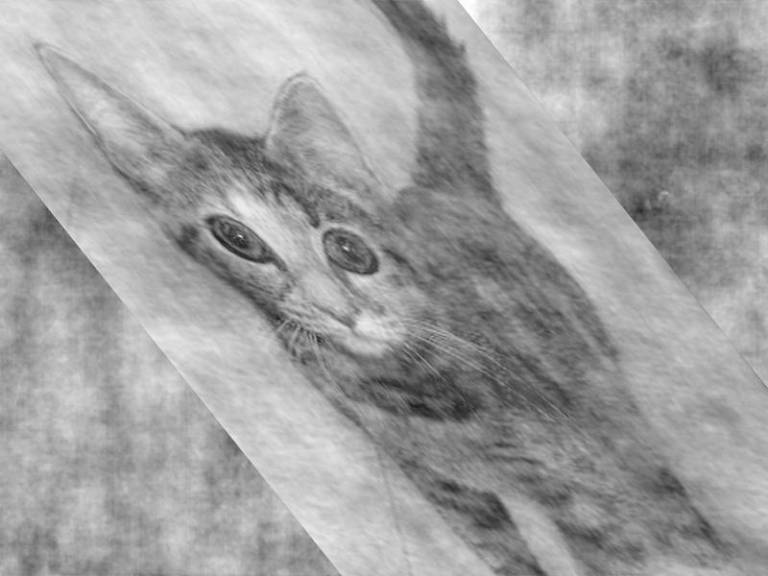 Distorted cat image