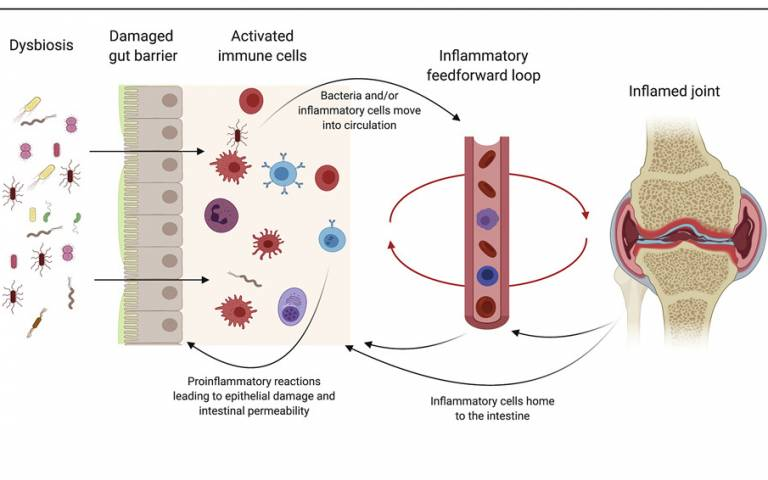 Section of graphical abstract from paper