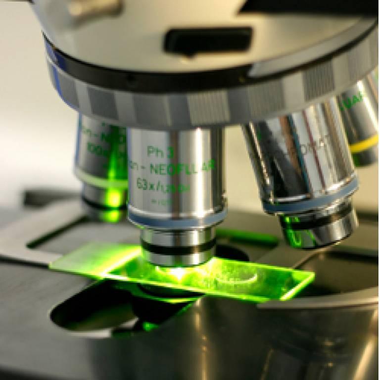 Human cells under microscope