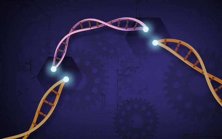 CRISPR-Cas9: Credit NIH image gallery