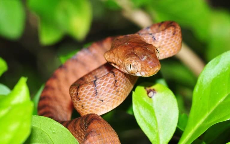 Extinct_snake.jpg