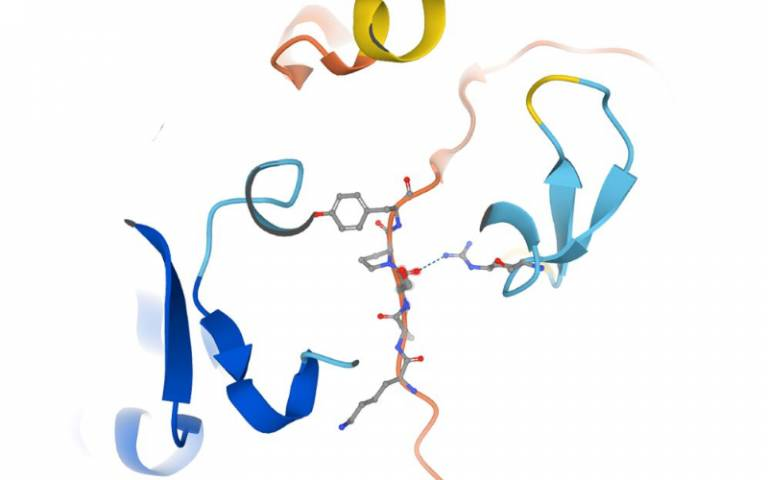 In this study researchers investigated the role of FAN1 - a DNA repair protein