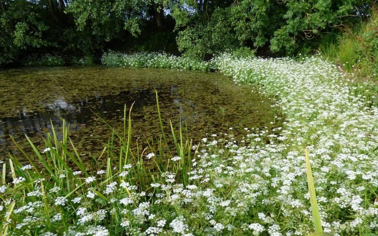 farmland pond