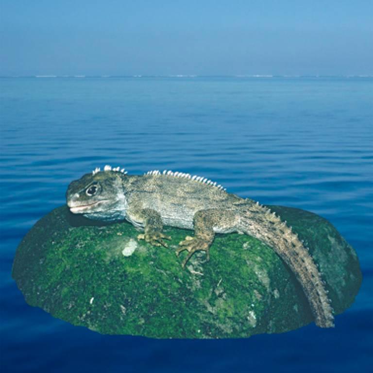 Lizard-like New Zealand reptile