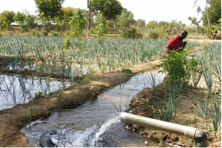 an image of Groundwater-fed irrigation of a high-value onion crop in the Maradi Region of Niger (Boukari Issoufou).