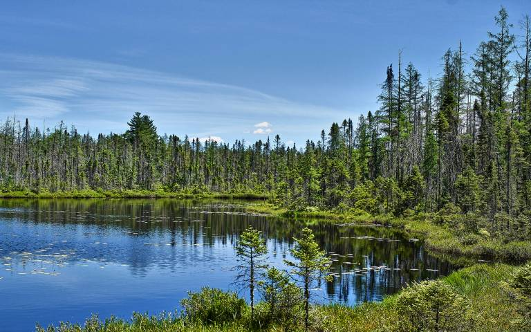A Boreal Forest