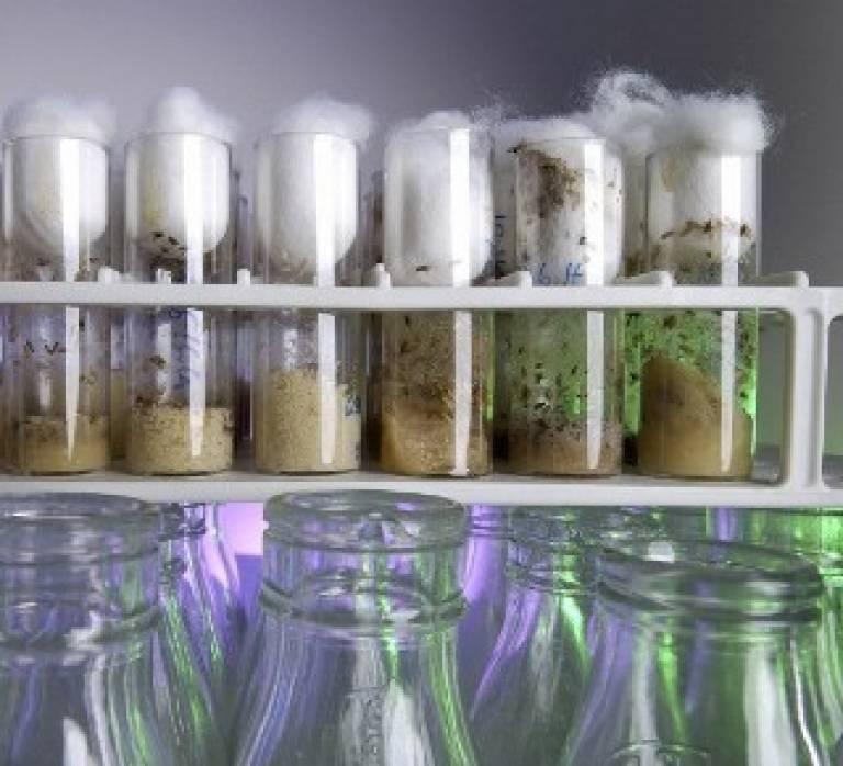 Jars of drosophila