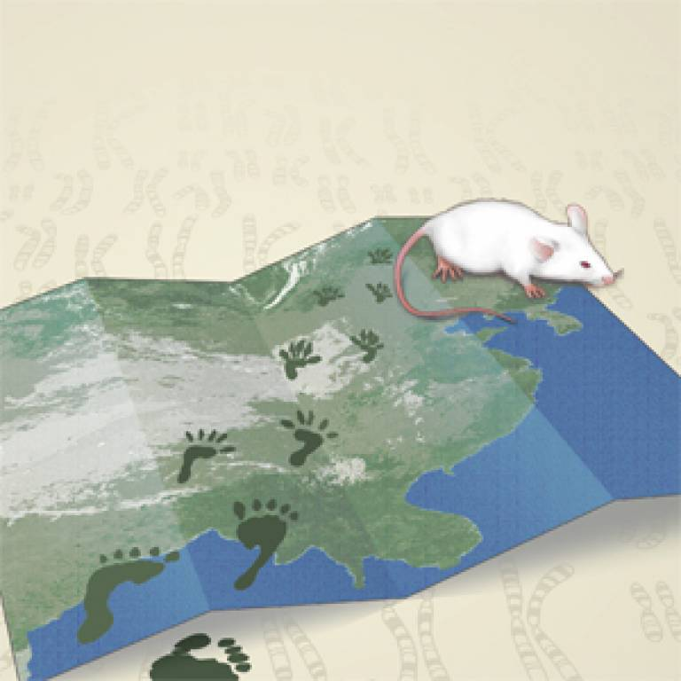 Mouse map