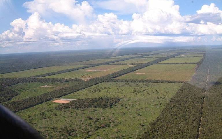 Paraguay land clearing