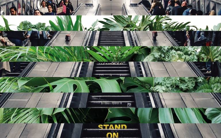 two images intersecting, one of plants and one of an escalator