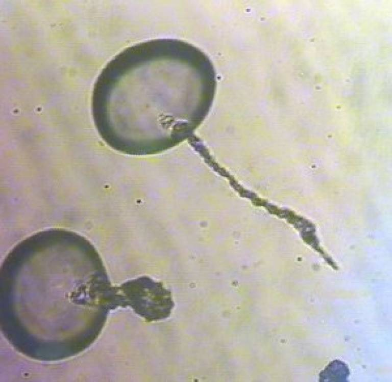 Swimming cells