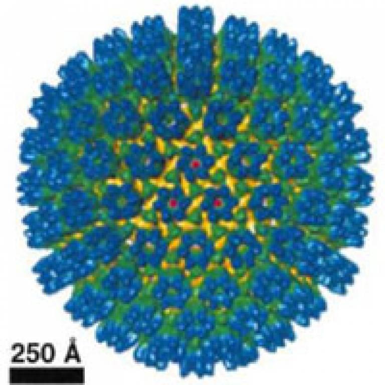 Kaposi sarcoma herpesvirus