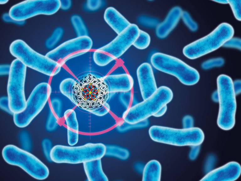 Synthetic 'virus' to kill bacteria | UCL News - UCL - London's ...