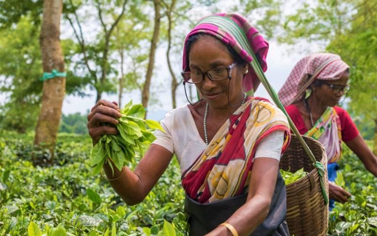 Women working in fields wearing glasses