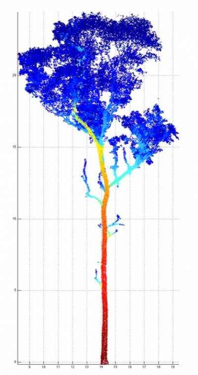 Tree scanning 2
