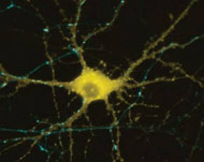 Neuroscience research image