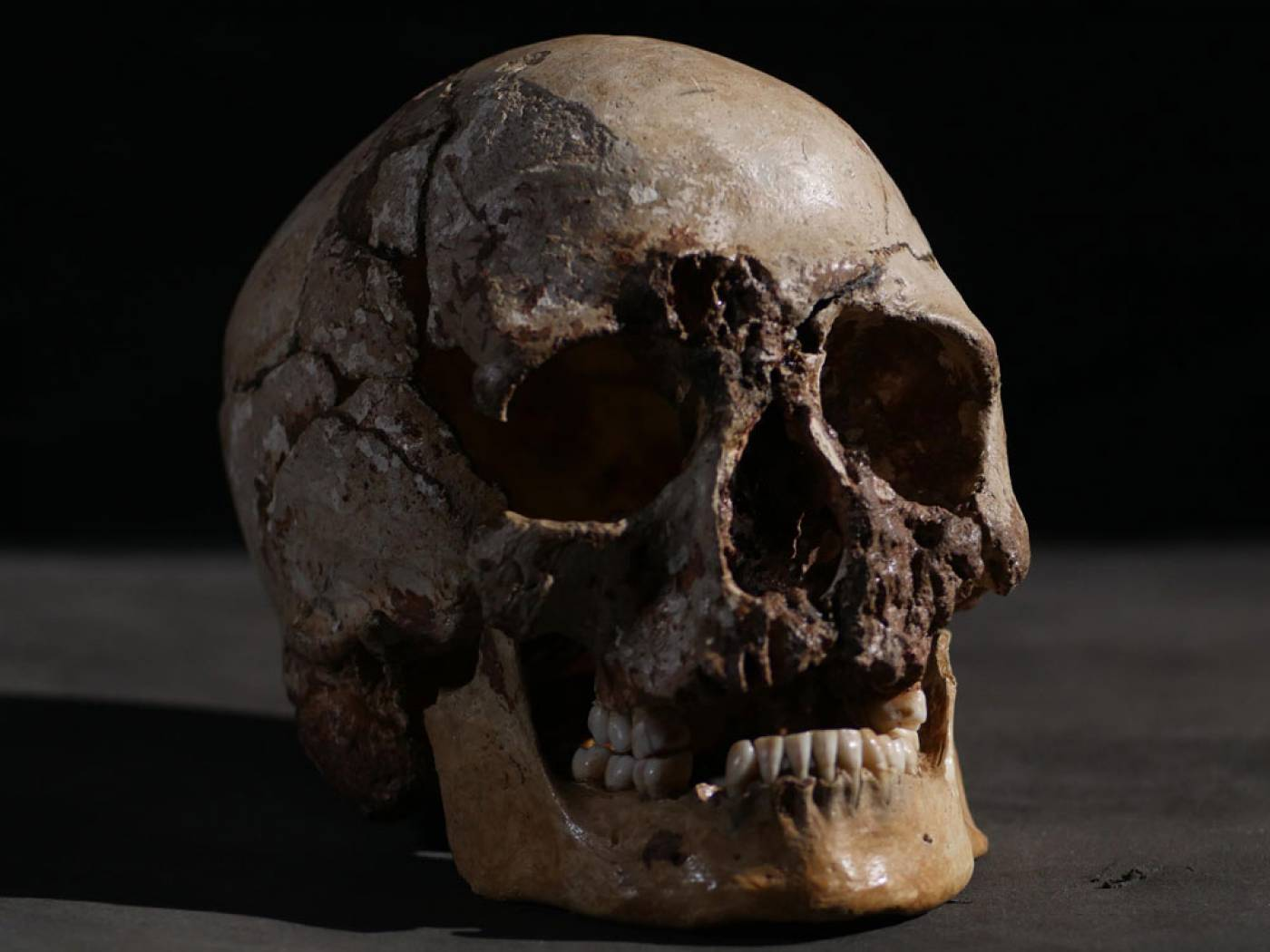 Cheddar Man skull