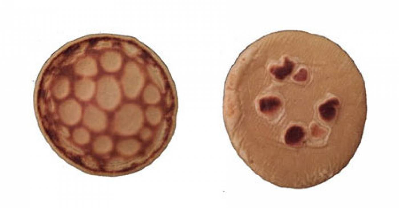 pancake canvas 1