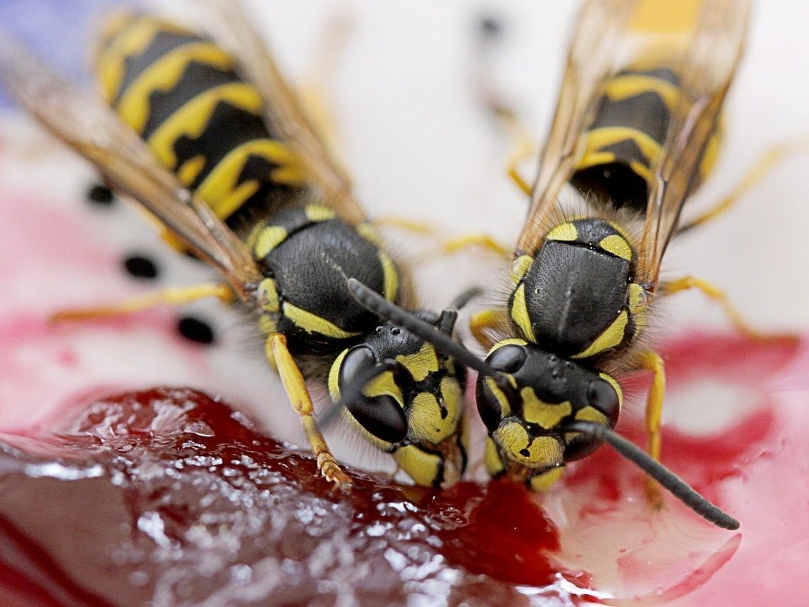 Wasps suffer a poor public image