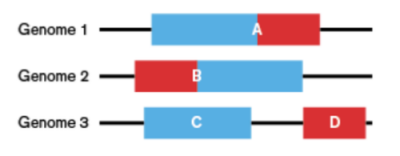 Figure illustrating the principal of CODA whereby domains (red and blue sections) are found fused in some genomes (1 and 2) but found on separate chains in a query genome (3).