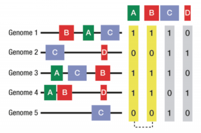 Figure showing co-occurrence of domain families A and B across multiple genomes implying a functional association.