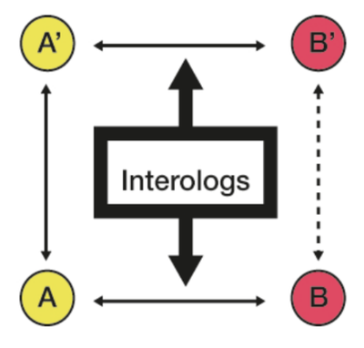 Experimental interactions between proteins A and B and inherited by orthology to infer the interaction A'-B'.