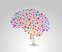 Brain colour graphic