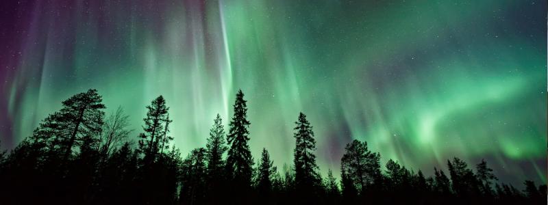 Aurora borealis above fir trees