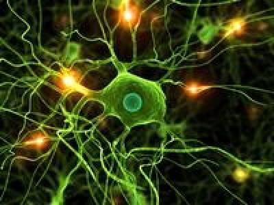 Active neurones 06935562