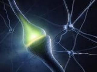 Synapse resized
