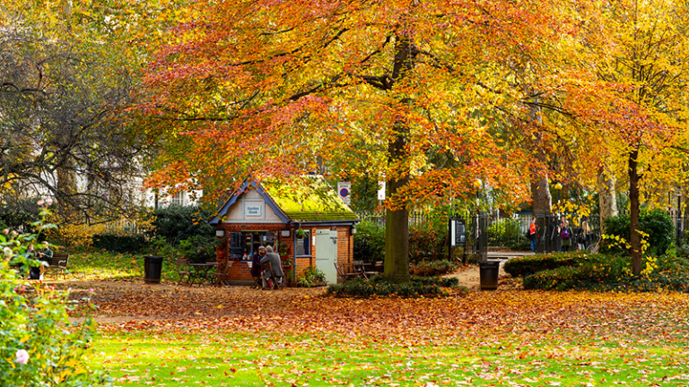 Autumn Trees and Shed