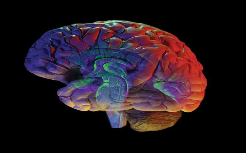 brain in 3d