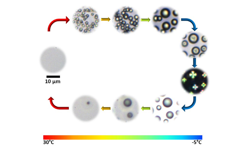 ToC figure of paper: Temperature-induced liquid crystal microdroplet formation in a partially miscible liquid mixture
