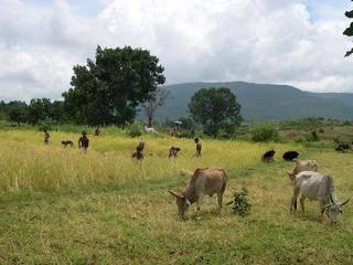 Orissa Upland Rice Farming