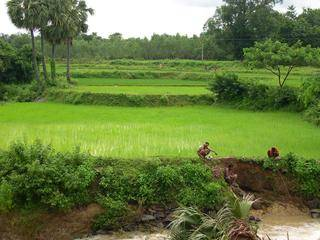Orissa Wet Farming