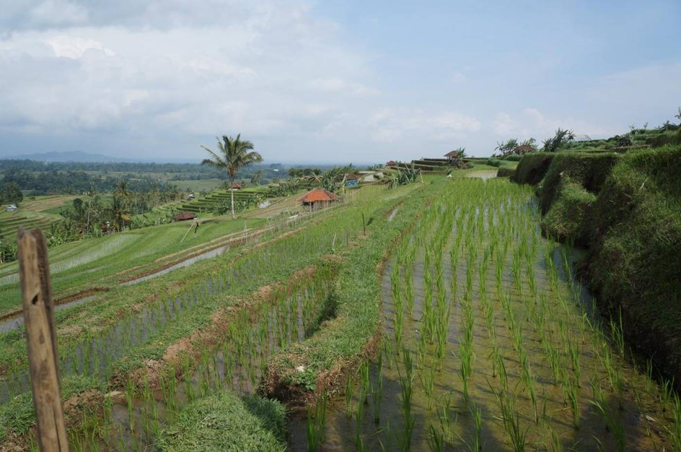 Bali wet rice terraces