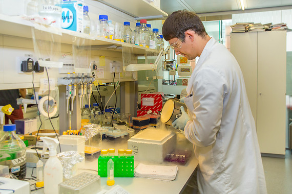 Male Scientist pouring at lab bench